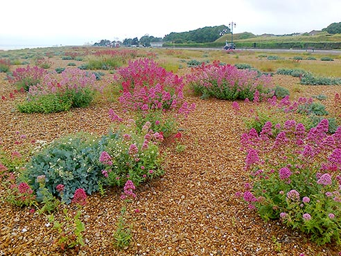 native-plants-and-wildflowers